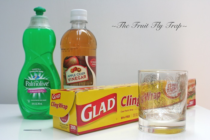 how to trap fruit flies healthy fruit loaf